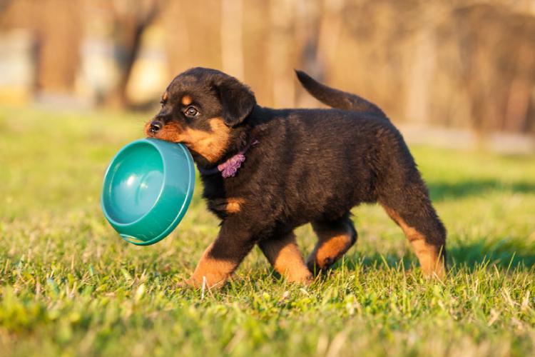 Puppy food bowl