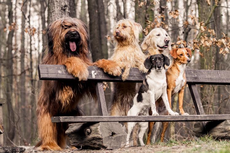 Honden Bos
